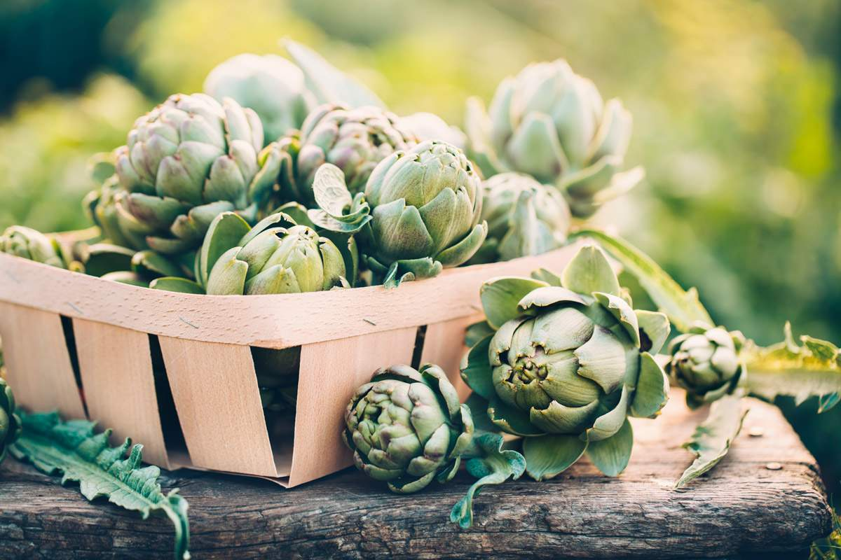 qué beneficios tiene la alcachofa y alcachofas sobre mesa